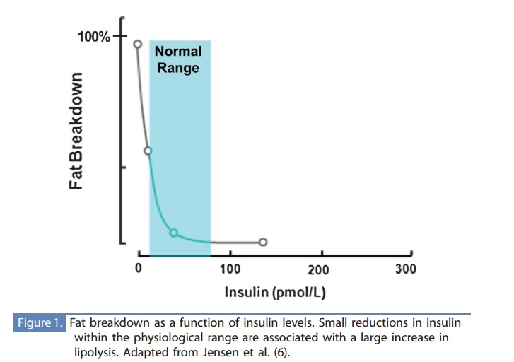 lipolysis and insulin