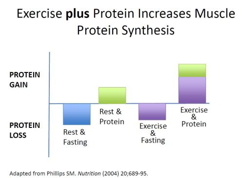 Image result for muscle synthesis