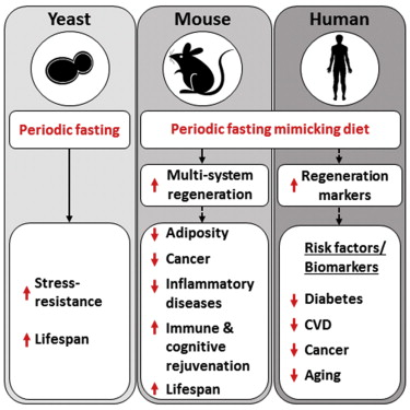 Fasting-mimicking diet slows aging - Rogue Health and Fitness