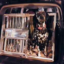 RandomsTravels travels in comfort and safety on her road trips, with this custom made car crate that is safety & comfort tested for pet-friendly Roadtrips.