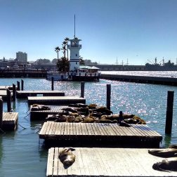 Fisherman's Wharf Pier 39 sea lions.