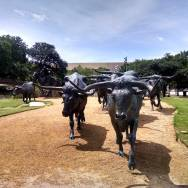 longhorn-cattle-sculpture-Dallas