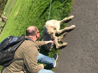 Saying goodbye to Mr Higgins, One of the Irish Wolfhound dogs that live at Ballyseede Castle. Roguetrippers include dogs in every vacation.