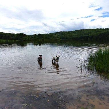 Random-and-Hazzard-in-lake