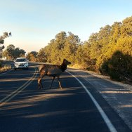 Make sure your brakes work when a deer jumps out in front of your vehicle on a Road Trip