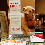 Pets always stay free at Red Roof Inn. Roguetrippers stay here with Randoms Travels a lot on road trips.