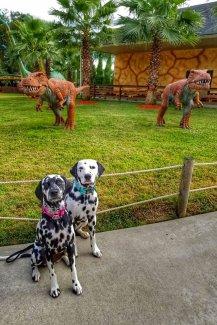 Randoms Travels visit pet friendly attractions like Dinosaur world in Florida on a Roadtrio