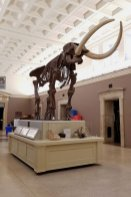 Mammoth Skeleton in the Buffalo Museum of Science