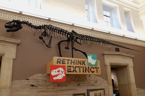Exhibits at the Buffalo Museum of Science include Dinosaurs, and other extinct creatures.