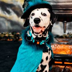 Witch-pix-hazzard-dalmatian-salem
