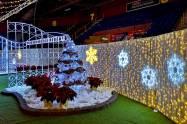 Christmas-Lights-Halifax