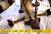 Reindeer-crash-christmas-festival-Halifax