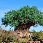 Walt Disney World Tree OF Life in the Animal Kingdom