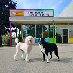 Cooper and Darwin - the Roguetrippers dogs love to visit the Guelph Little Theatre