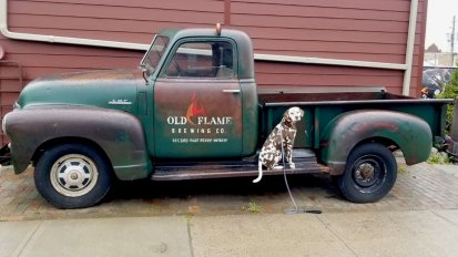 Danger the Dalmatian visits Old Flame Brewing Co in Port Perry