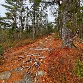Roguetrippers go hiking in Salt Marsh Trail near Halifax Nova Scotia