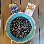Bowl-of-fresh-picked-blueberries-from-TNTBerries