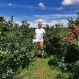 Nick Kulnies enjoys a stroll through the blueberry fields of TNT Berries