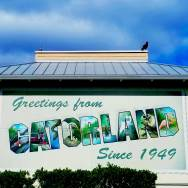 Welcome to Gatorland - Orlando Day trip