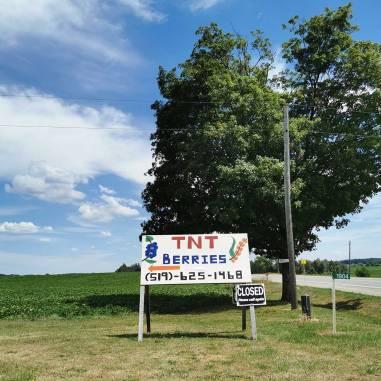 TNT Berries in Shakespeare Ontario