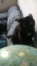 Oswin playing by our globe of interesting facts.