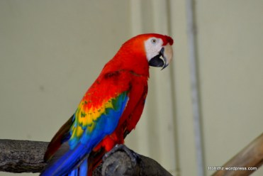 Beautiful colored parrots
