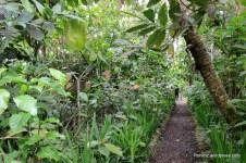 Sailand coffee plantations