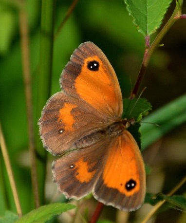 Female gatekeeper