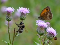 Gatekeeper and bee
