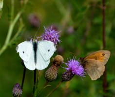 Spall white and gatekeeper