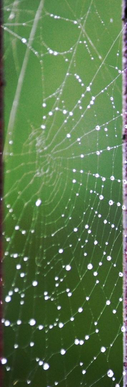 wet web