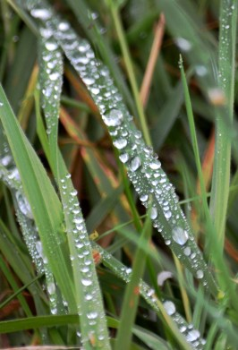 Just rain on grass, is all.