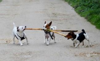 Who's stick?