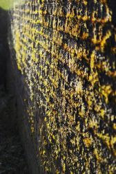 Mossy wall in the sun