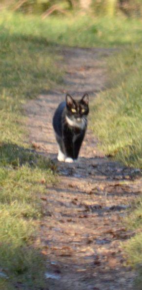 Cat the hunter