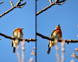 Robin twice