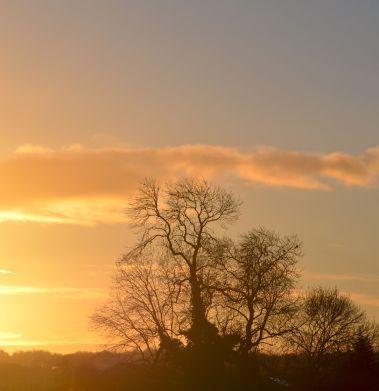tree: meet sun