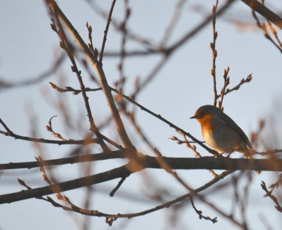 Sun on robin