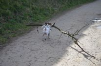 Archy with a small stick