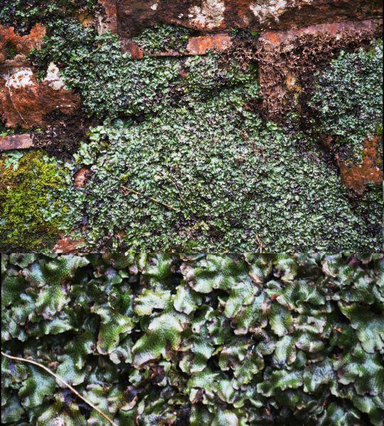 licheny stuff