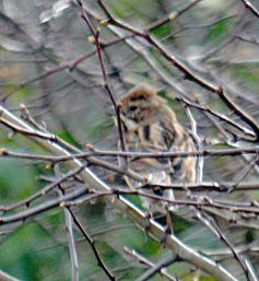 Little brown bird