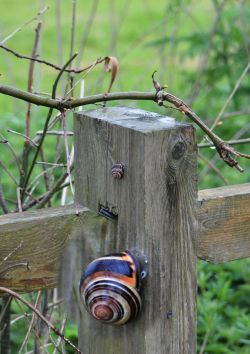 Snail (and close up)