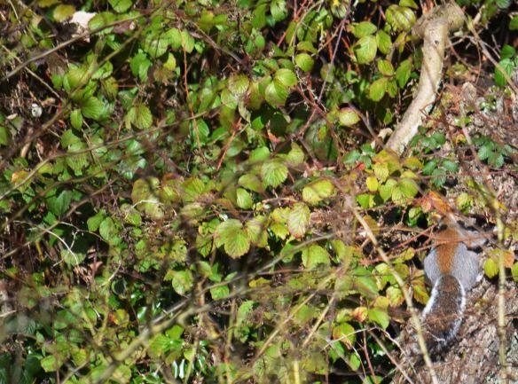 DSC_9229Squirrel