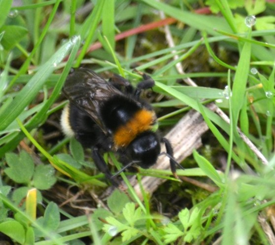 Bee rummaging around on the ground