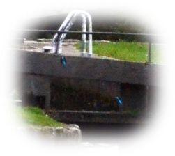 (composite) kingfisher