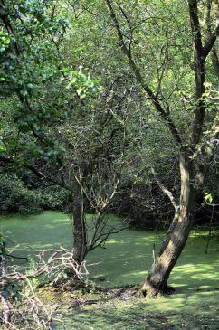 Lady lee green water