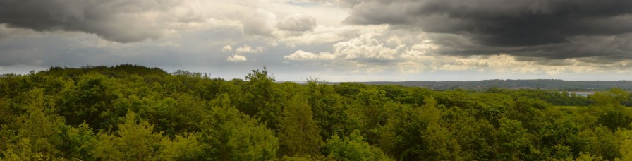 Pano from Shireoaks Woodlands