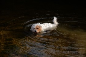Molly coming out of the water