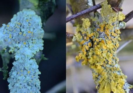 various colours of lichen