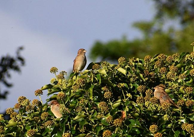 161010_155622_202sparrows